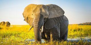 ゾウの鼻は時速540kmもの速度で水を吸い込めることが判明、吸引される水の速さは新幹線の1.5倍以上 - GIGAZINE