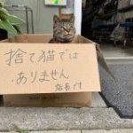 箱に入った猫「捨て猫ではありません」→その正体はとても働き者だった「時代は猫が作る」謝罪のために頭も下げる謙虚さ – Togetter
