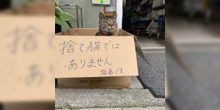 箱に入った猫「捨て猫ではありません」→その正体はとても働き者だった「時代は猫が作る」謝罪のために頭も下げる謙虚さ - Togetter