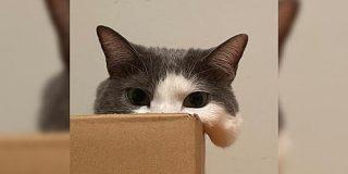 私たちが猫と考えるものの実体はほぼ毛なのかもしれない説「どこまでが毛なのか」 - Togetter