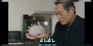 『上様、お戯れを!』松平健さんとハリネズミのイチャラブ動画が可愛すぎて「ズキューンてなった」「上様の掌で転がされる可能性」 - Togetter