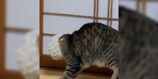 ヘアバンドで遊んでた猫さん、エリザベスカラーみたいになってしまい勝手にしょんぼり顔に「突然の虚無」「ポンデライオン」 - Togetter