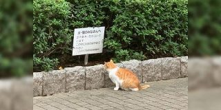 看板のメッセージを読めないふりをしている猫がとても可愛い - Togetter