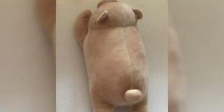 洗濯するたびに太っていっているクマさんのぬいぐるみがこちら「かわいすぎる」「洗ったら太るの!?」 - Togetter