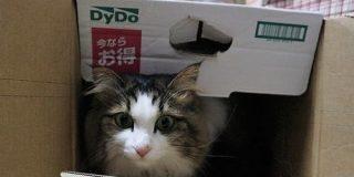 【猫の起源】野生のヤマネコからの華麗なる転身。 | ヒメとまいにち