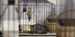 まさに「猫は液体」!ケージに入れられた猫さんの脱出シーンが衝撃的だった「頭が入れば通るって本当だったんだな」 - Togetter